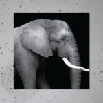 buy elephant canvas print poster animal