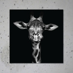 buy giraffe canvas print poster animal