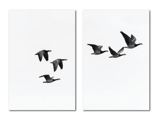 Birds flying scandi print