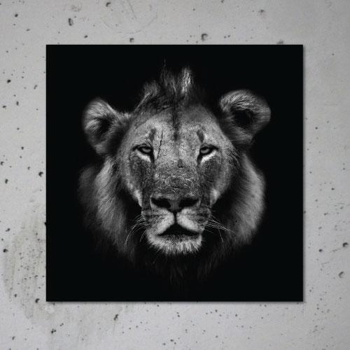 Lion Canvas Print Poster Animal