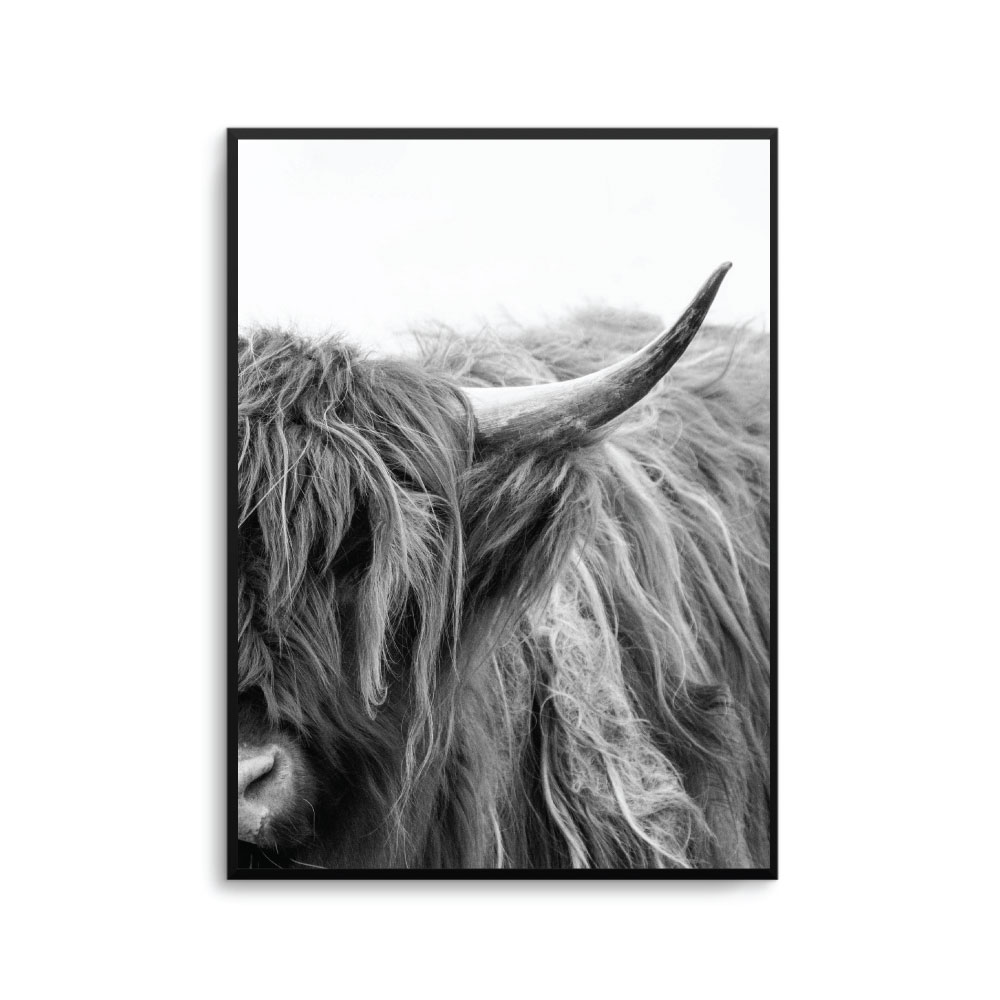 b74aa599292 Highland Cow Art Print Poster Unframed High land Cattle Cow Poster ...